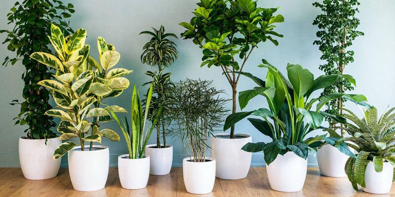 گل و گیاه وارداتی