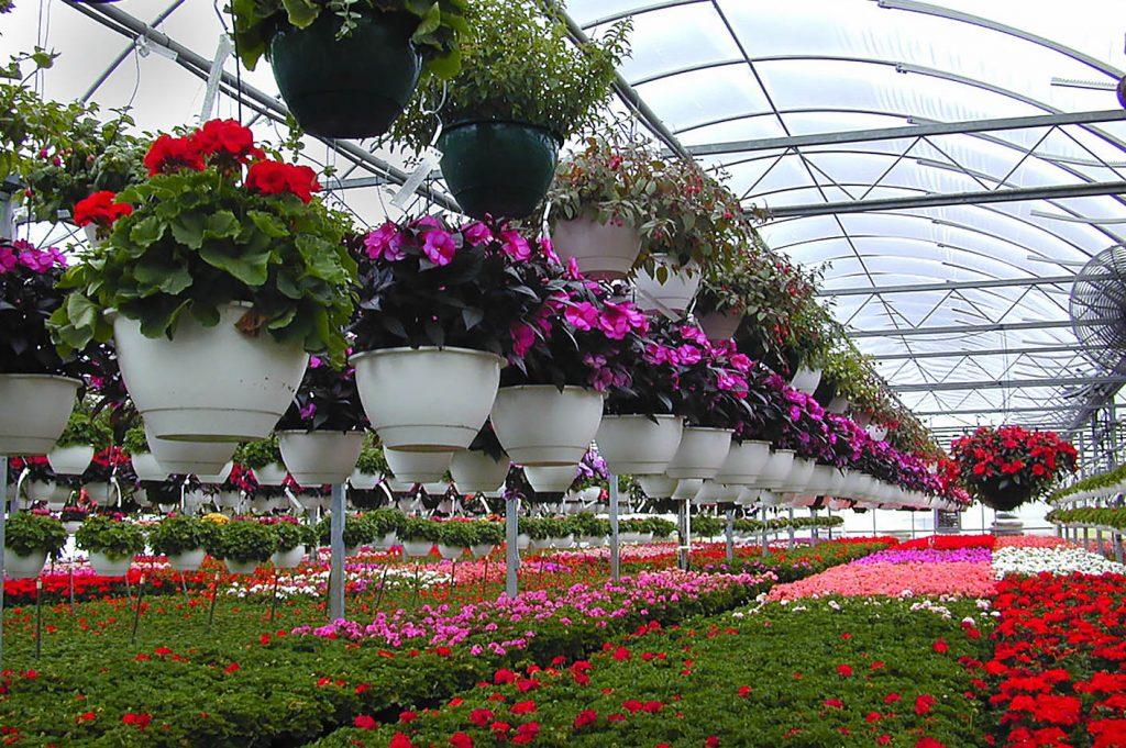 پرورش گل ها و گیاهان زینتی